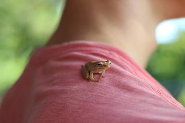 Крутая лягушка