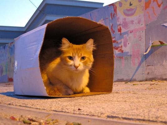 Остров Бююкада — остров кошек