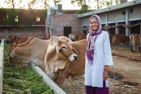 Самые красивые коровы в Индии