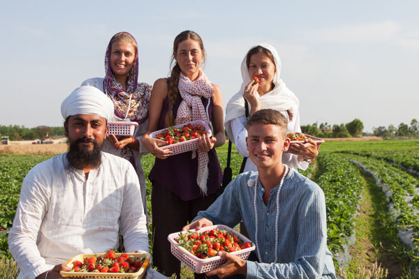Namdhari strawberry farm