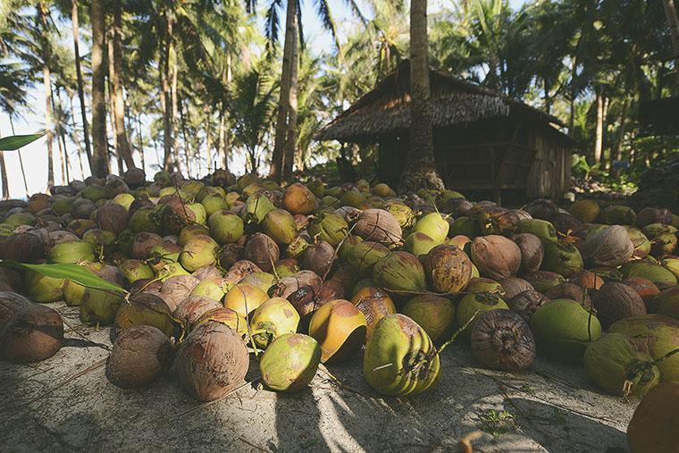Кокосы на Филиппинах